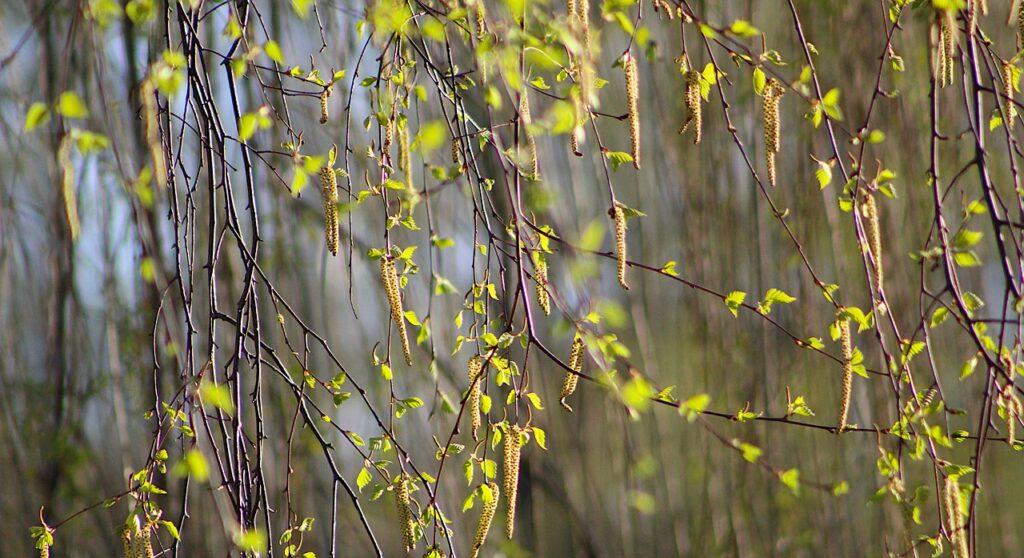 Nature Plant Young Leaflet Spring  - gosiak1980 / Pixabay